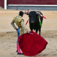 Bullfighting: Art vs Moral Dilemma