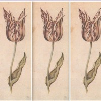 Tulip Mania: Madness in the 17th Century Netherlands